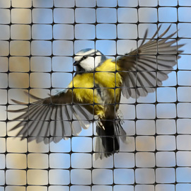 High Tensile Bird Netting