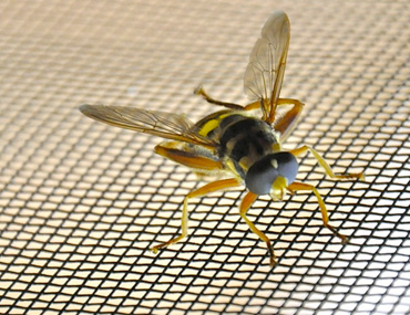Insect Mesh / Fly Screen