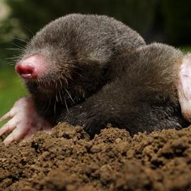 Mole Proof Mesh