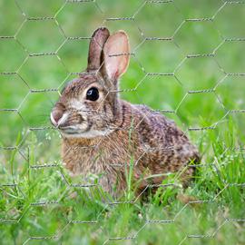 Rabbit Wire Netting